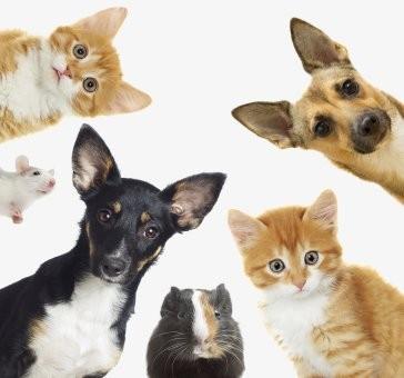 Állatgyógyászati készítmények
