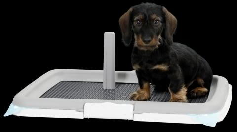 Puppy Training szett, a kutyák szobatisztaságra neveléséhez