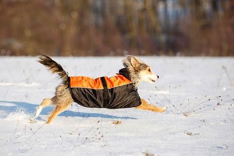 Minden téli kutyakabát 15% kedvezménnyel;)