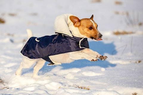 Téli kutyakabátok