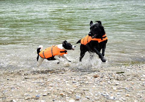 Mentőmellény kutyáknak, a biztonságos nyaralásért :)